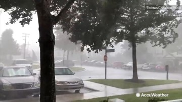 Wind shakes trees around