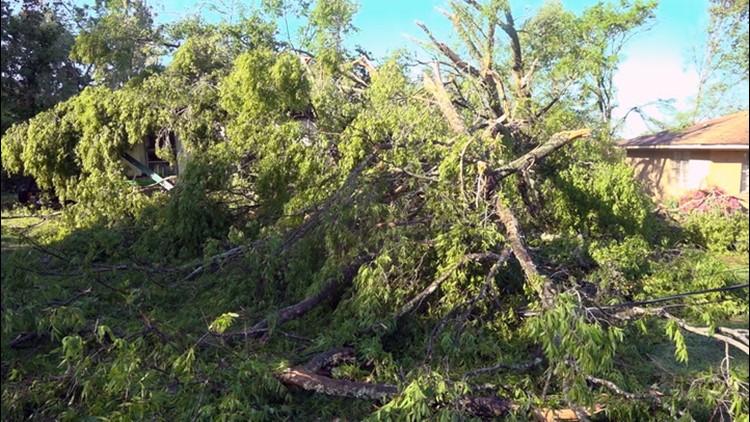 How tree pruning can reduce the risks during spring storms