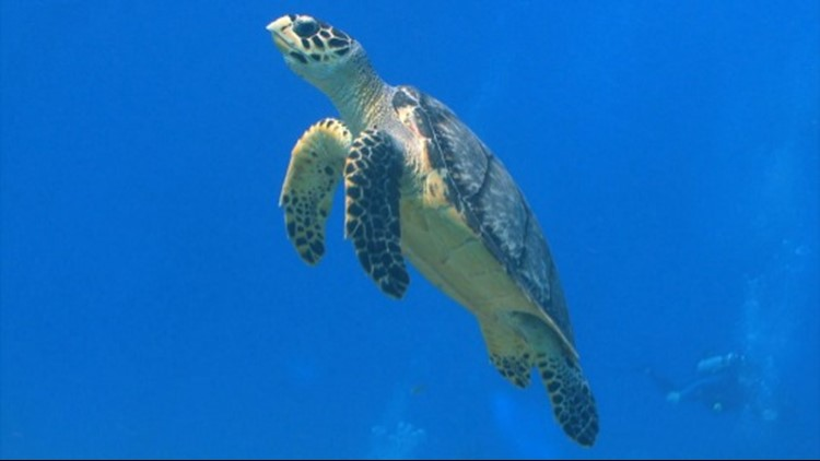 Some Marine Animals Can Avoid Ocean Heat by Swimming Thousands of Miles