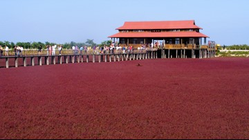 Crimson Beach in China Looks Like it Belongs on an Alien Planet