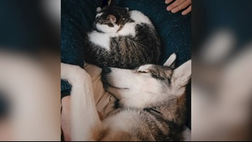 Cat and Dog Make Unlikely Fur-Ever Friends