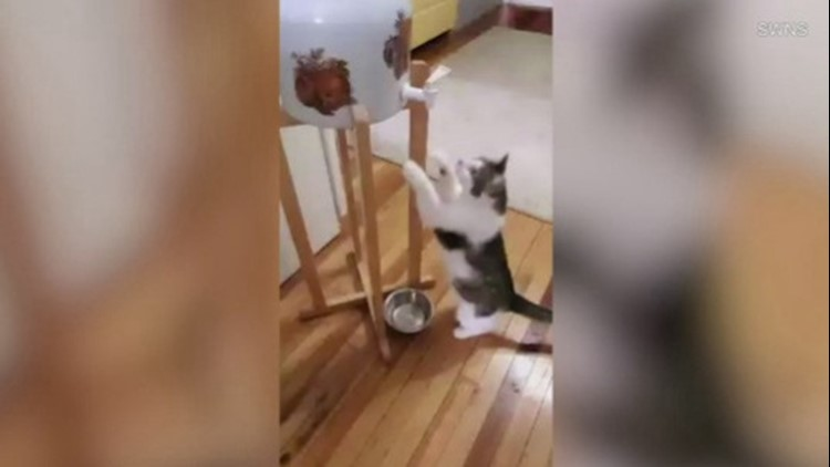 Ever Wonder If Cats Have Water Cooler Chat? This Adorable Little Kitten Might Just Be On Her Way