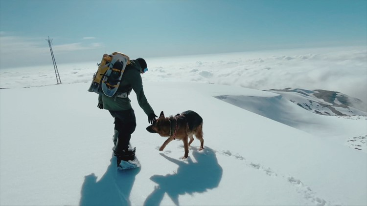 Snow Dog! Check Out This Powerful Pup Keep up With His Owner on a Snowboard!
