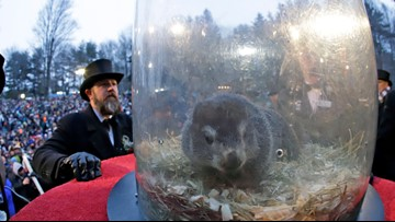 PETA calls for robot Punxsutawney Phil with AI to predict weather