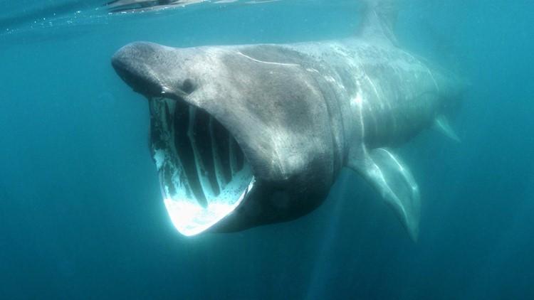 Viral video shows massive shark circling boat in Atlantic Ocean