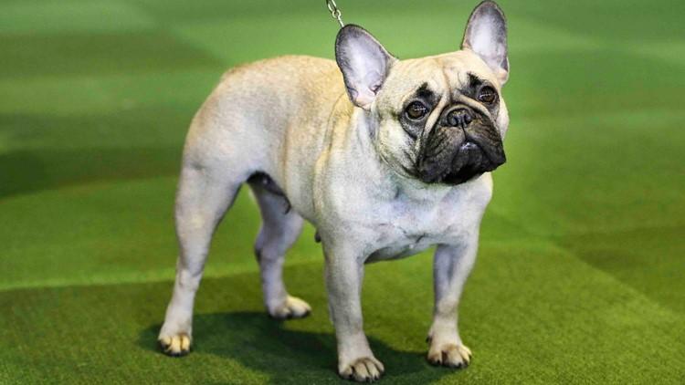 America's most popular dog breeds of 2020 revealed