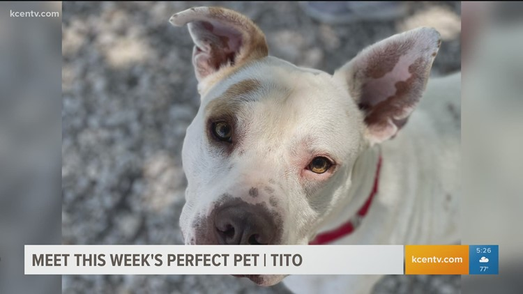 Perfect Pet: Meet, Tito!