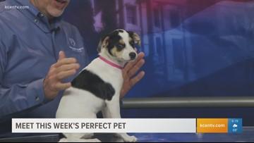 Pefrect Pet: Meet Lexi