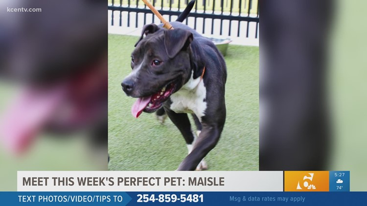 Perfect Pet | Maisle