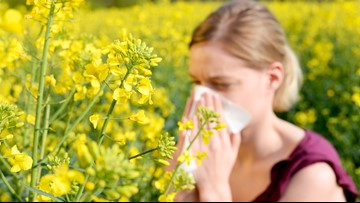 How to handle allergies in Central Texas