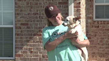 Abandoned, abused, old and sick: Woofhaven Farm gives canines love and care in their last days