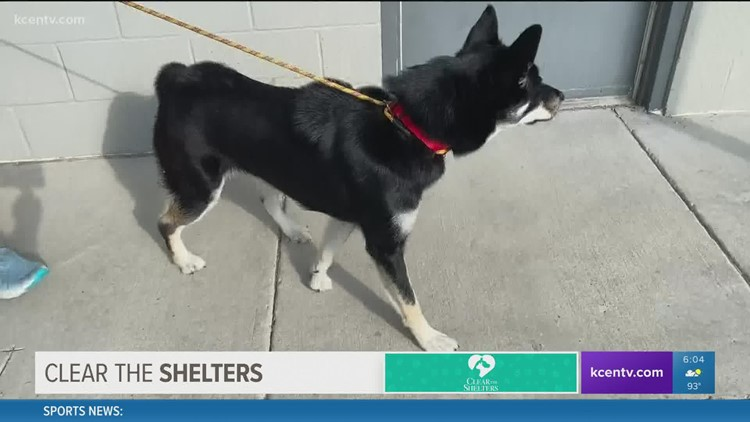 Finding a 'furever' home: Waco animal shelter holding adoption event