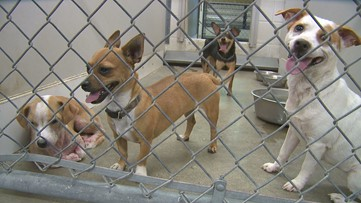 $2M Temple Animal Shelter expansion planned to ease overcrowding