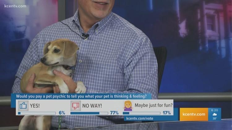 Perfect Pet: Meet a playful Beagle mixed breed dog