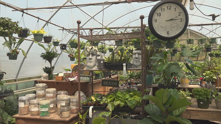 Plant buying is latest big trend during pandemic