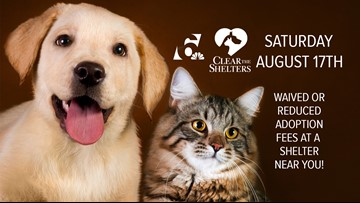 Adopt a pet, help 6 News Clear the Shelters