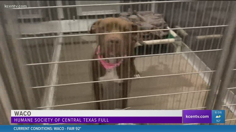 Humane Society of Central Texas full... again