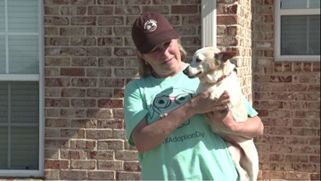 Woofhaven Farm: Old dogs given new lives