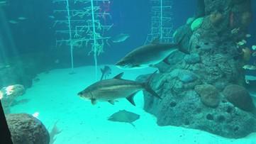 Florida Aquarium in Tampa