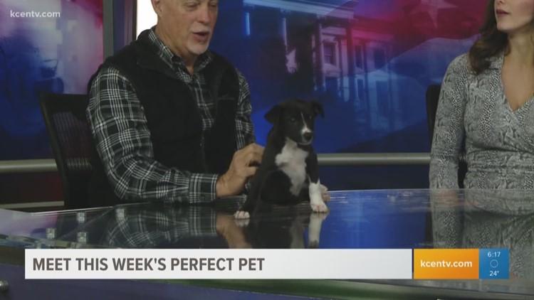 Perfect Pet: Meet Lady
