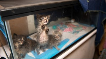 Nearly 200 cats rescued from horrible home in Killeen