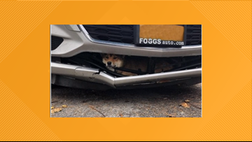 Lucky dog survives wild ride in car's bumper