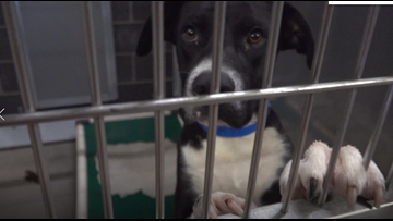 Humane Society of Central Texas asks for public's help as shelter exceeds maximum capacity