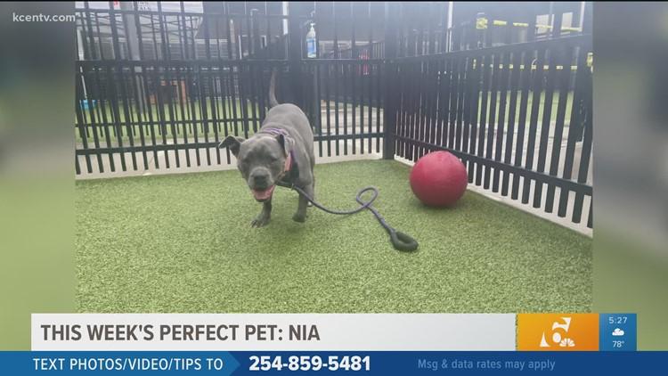 Perfect Pet | Meet Nia
