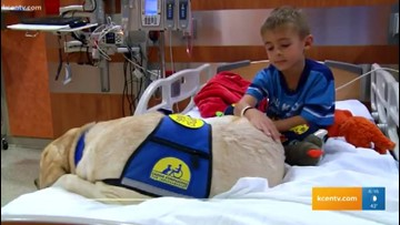 Central Texas Spotlight: Lorenzo the dog comforts sick children during hospital visits