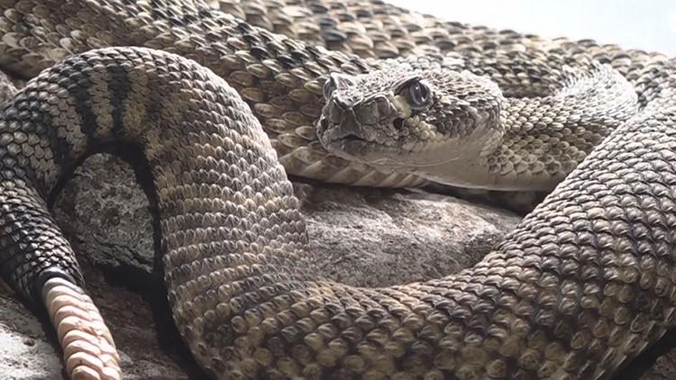 Safety tips to prevent snake bites