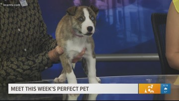 Perfect Pet: Meet Savannah