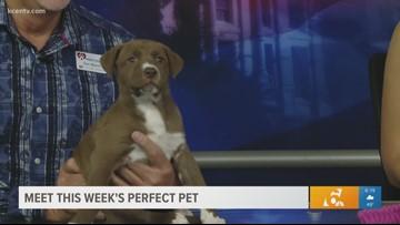 Perfect Pet: Meet Cassie