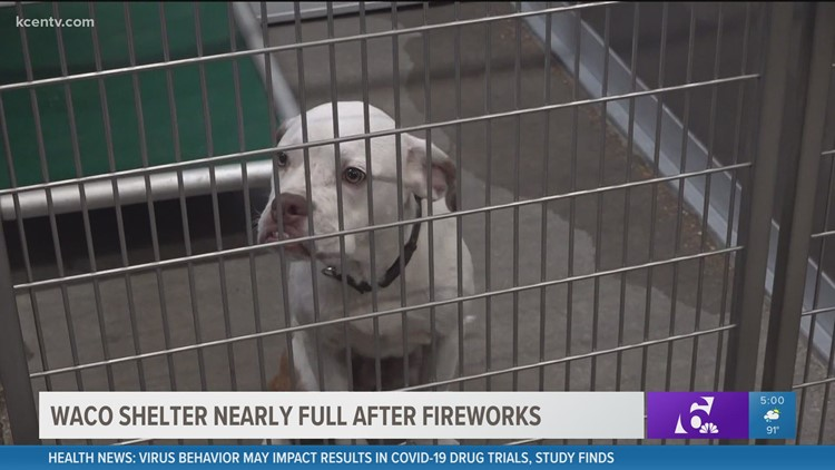 Waco animal shelter nearly full after Fourth of July fireworks send pets scrambling