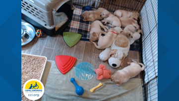 Puppies! Take your mind off coronavirus and zone out with this live puppy cam