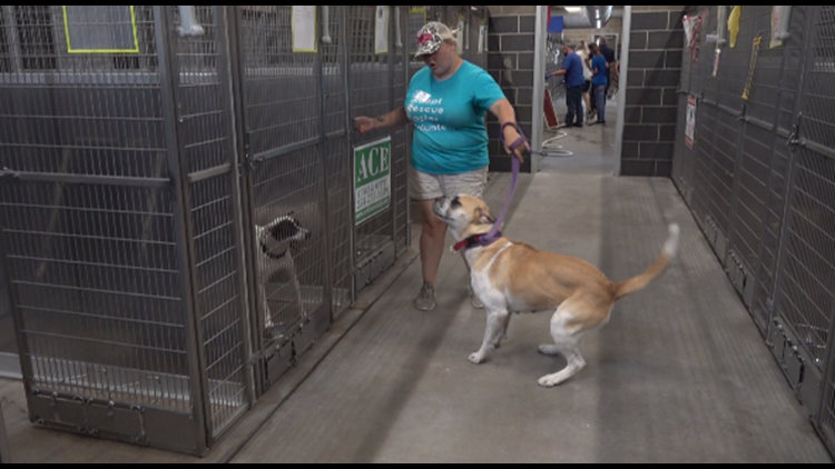 'It's been a disaster for us' | Waco animal shelter nearly full after weekend fireworks send pets scrambling