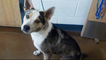 Dogs with Temple Animal Services looking for new families