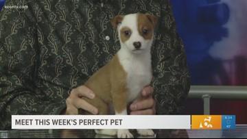 Perfect Pet: Meet 'Little Bit'