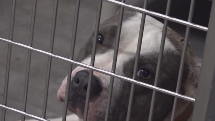 Killeen Animal Shelter is offering free pet adoptions this weekend