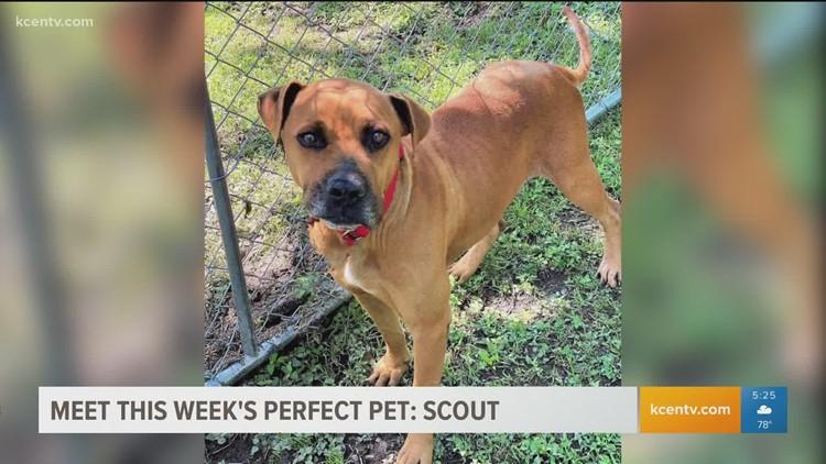 Perfect Pet: Meet Scout!