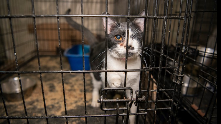 UPDATE: 2 cats euthanized, 40 dead animals found in freezer after almost 200 animals removed from Killeen house