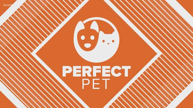 Perfect Pet | Scout & Gigi