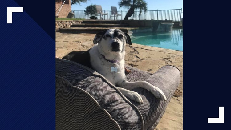 Bandit on dog bed near pool at Woofhaven Farm