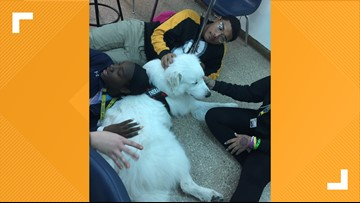 Cove High therapy dog reduces student and staff stress