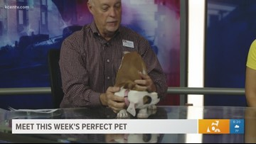 Perfect Pet Nov. 7, 2018