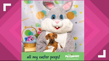 Hop on in to PetSmart for free pictures with the Easter Bunny this weekend