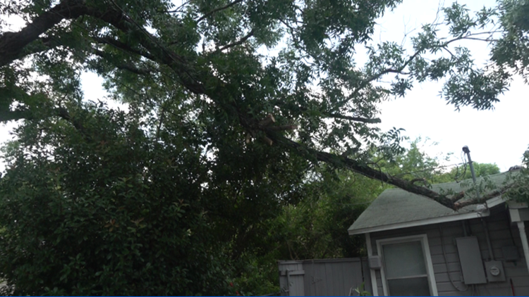 6 Fix | Temple family gets tree limb removed after Oncor makes a policy exception
