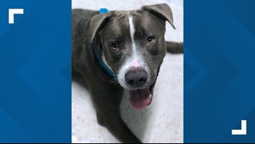 Humane Society of Central Texas offers free adoptions to battle 'overwhelming' intake numbers