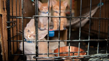 200 neglected cats, dogs removed from horrible home in Killeen