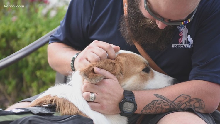 K9s For Warriors: Rescuing dogs to rescue veterans
