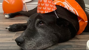 Whataburger throws party for dying dog in his final days